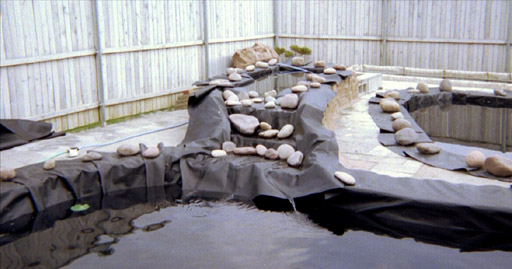 Pictures Of My Pond